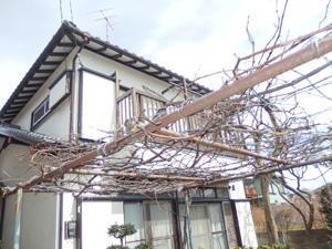 nishiyama201606_f_06.jpg